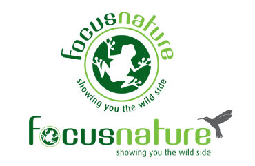 Silver Lining Graphics client logo design example for Focus Nature